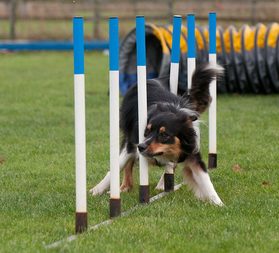 Wendy Hill Dog Training - wendy-dogs-banner-1